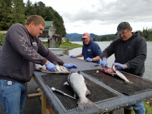 Nick, Jon and Mike (Left to right) filleting fish at the end of the day.